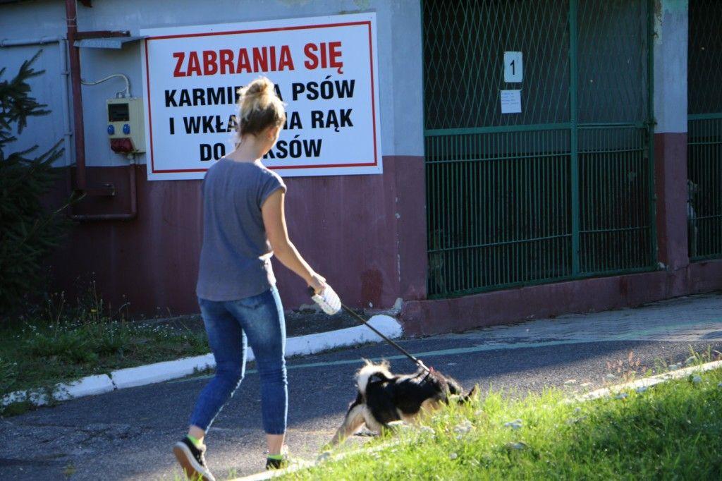 Nie porzucaj zwierząt! - apeluje straż miejska